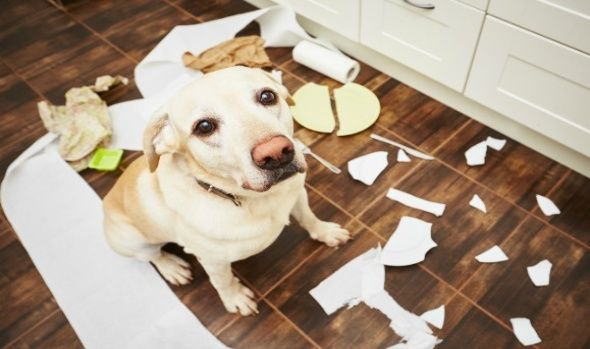Pet Cleaning Tips!