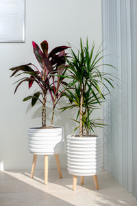 Groove Jr. Ceramic Planter