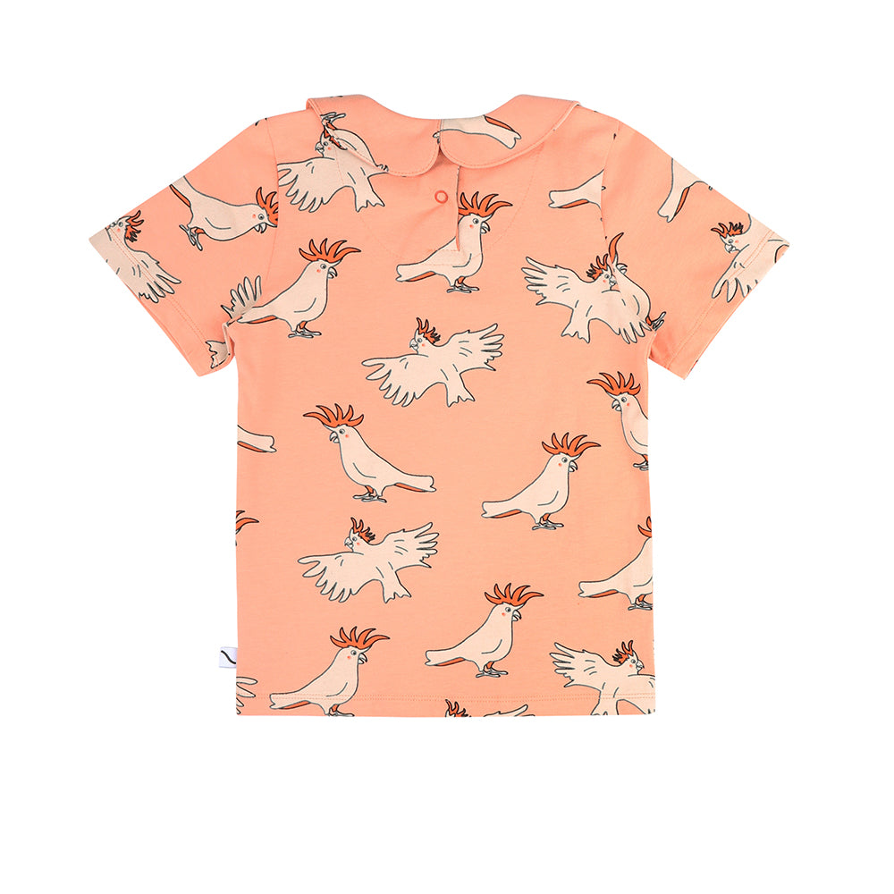 Parrot Collar T-shirt - LAST ONE 1-2 years