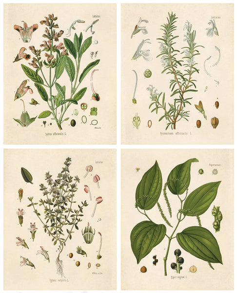 Curious Prints - Set of Vintage Botanical Herb Prints - 8x10