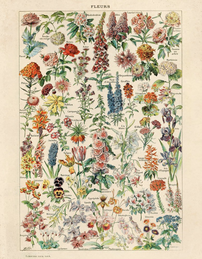 Botanical French Garden Print