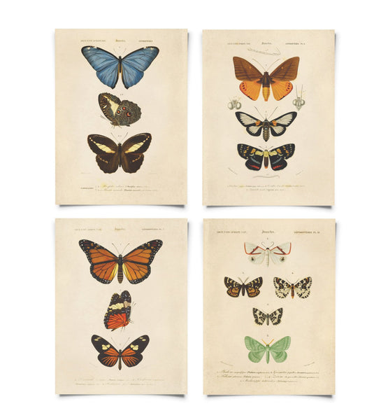 Curious Prints - Set of Vintage Butterfly Prints - 8x10