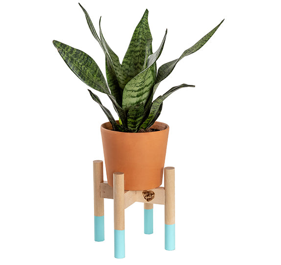 Modern Plant Stand 6""
