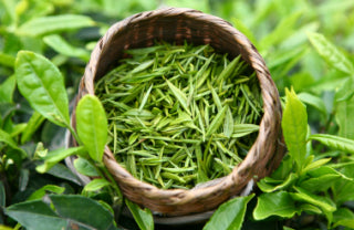Camellia Sinensis Leaf (Organic Green/White Tea) Extract