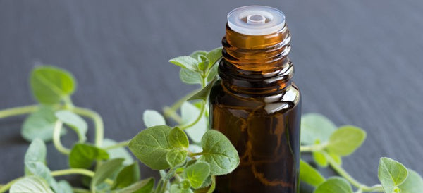 Organic Oregano Leaf Extract