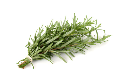 Rosmarinus Officinalis (Organic Rosemary) Extract