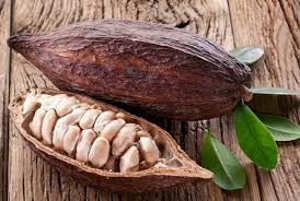 Theobroma Cacao (Cocoa Butter)