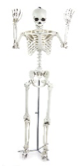 Halloween - 1.5M Standng Posable Skeleton