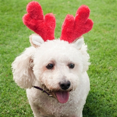 Zippy Paws Christmas Holiday Antlers - Small