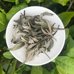 Young Guava Leaf Herbal Tea
