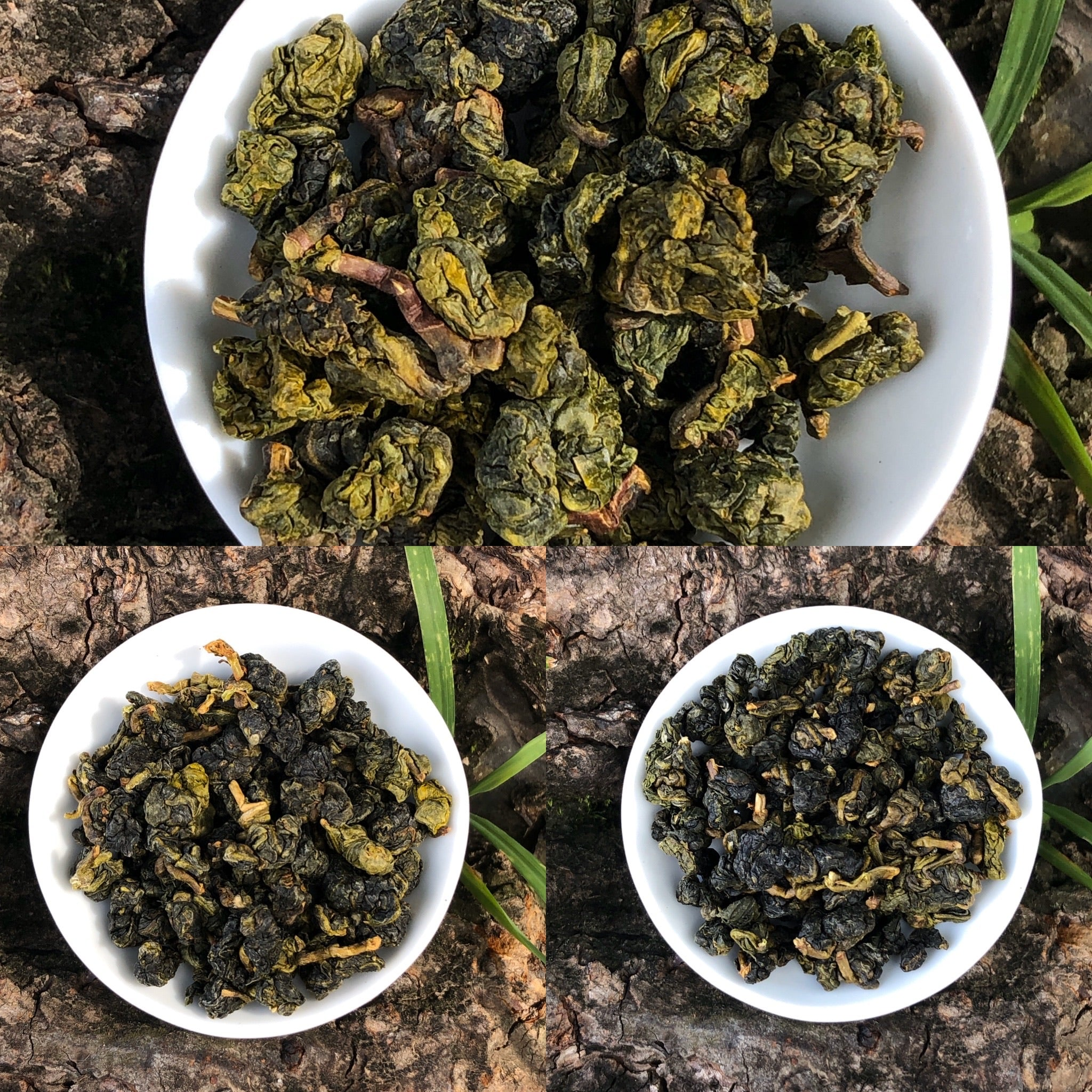 Three Season Set of Classic Alishan Oolong