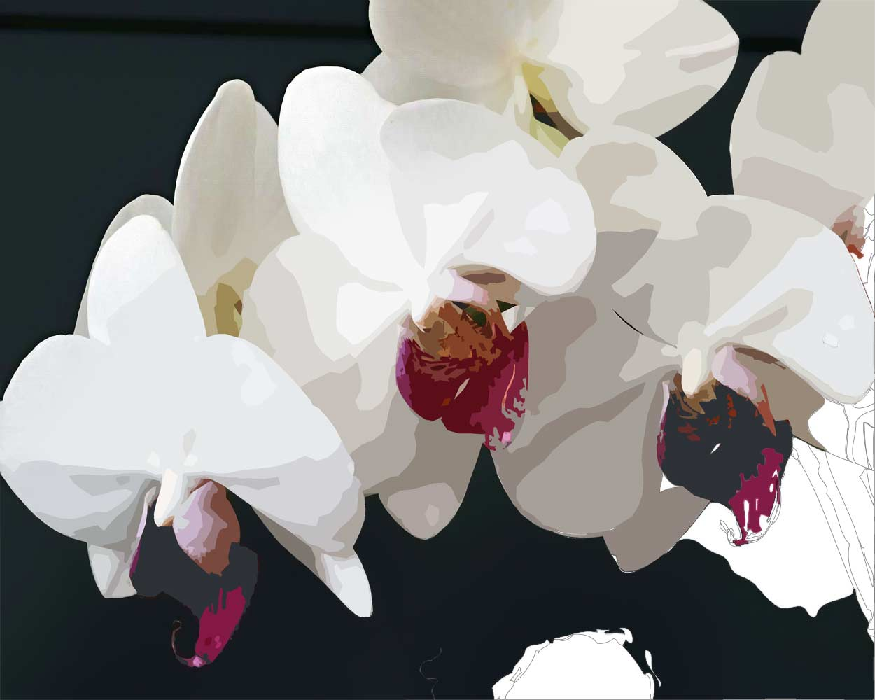 White Moth Orchid Flowers Art Paint By Numbers Say Hello To Fine