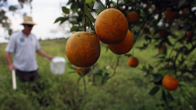 Florida homeowners to split more than $52M after citrus canker battle