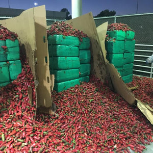 Jalapeño Mary Jane? Border Patrol Seizes 4 Tons from Smugglers