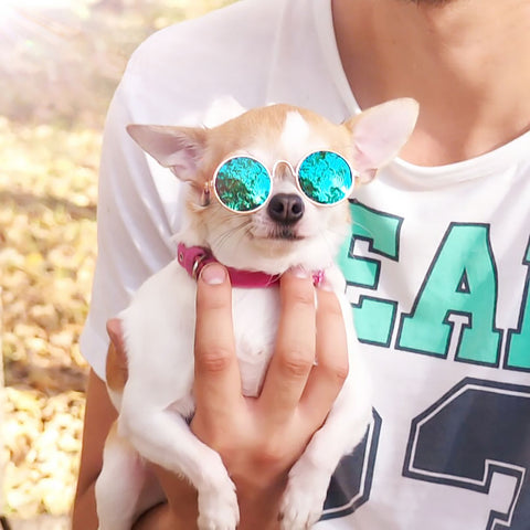 Pet Shades | UniPet Sunglasses (Cats + Dogs)