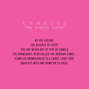Camelus - ShopAuthentique