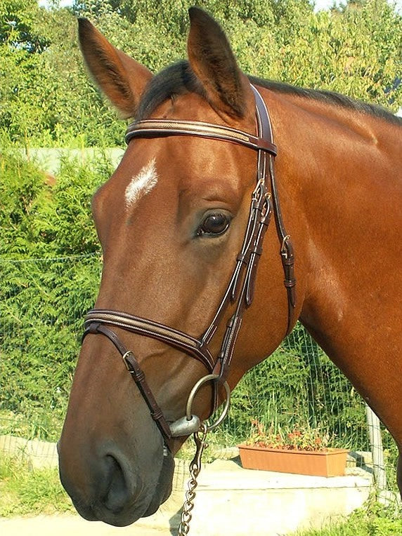 Dy'on Snakeskin Flash Noseband Bridle
