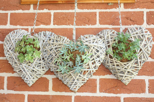 Hanging Succulent Love Heart - Kit Form (Post) or Made with Succulents (Pick up only)