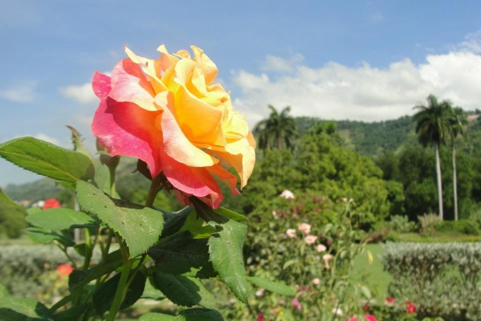 What are the Best Romantic Dates to Enjoy in Jamaica