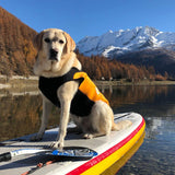 Dog WetsuitWetsuits for dogs