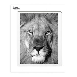 LE LION - Frenchbazaar -Image Republic