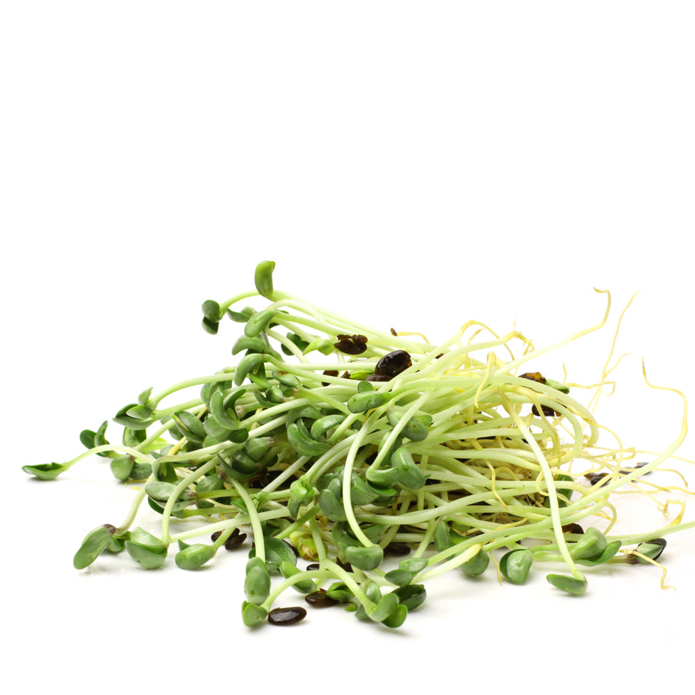 Black bean sprouts