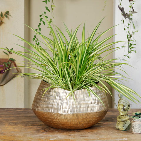 The Home Small Round Planter Gold GD1026-B