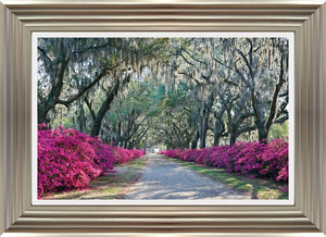 Azaleas By Winthrope Hiers - Mail Order Art