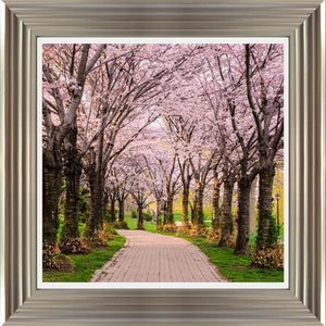 Cherry Blossom Trail By Chuck Burdick - Mail Order Art