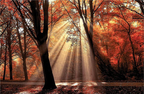 Dressed To Shine By Lars Van de Goor - Mail Order Art