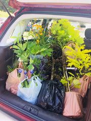 Plant Purchases at Mount Stewart