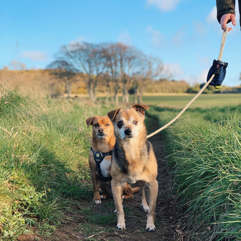 My Top Three Dog Walking Accessories