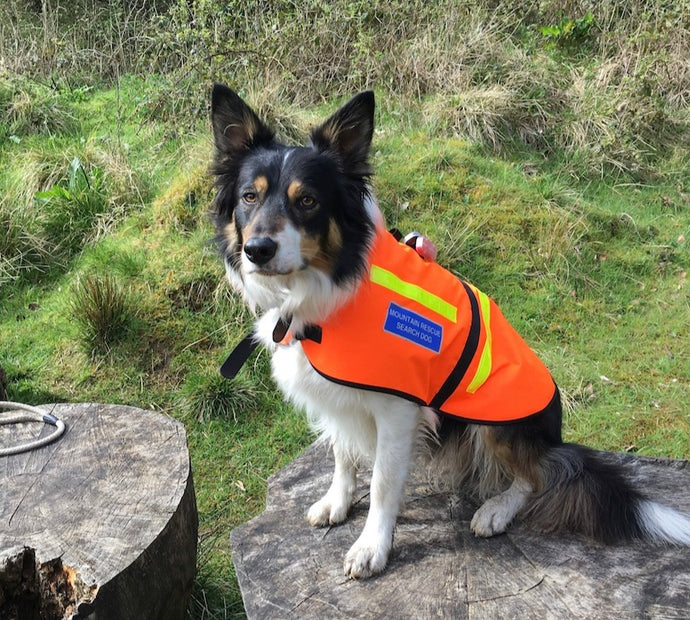 Scout the Mountain Rescue Dog