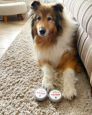 Paw balm review with Summer collie