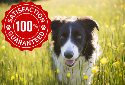 dog balm guarantee