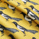 Yellow Magpie Fabric