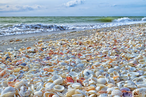 13 Best Beaches for Shelling in Florida