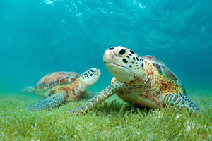 Best Spots for Turtle Watching in Puerto Rico
