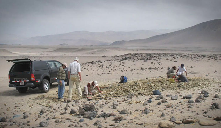 Ancient Four-Legged Whale Undercovered in Peru - Little Miss Meteo