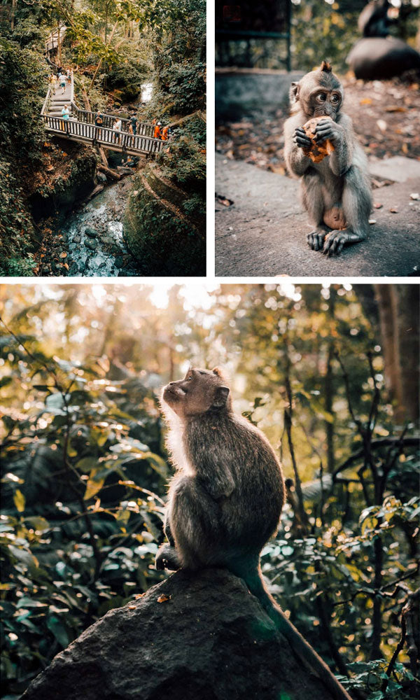 Bali - Monkey Forest in Ubud - Little Miss Meteo