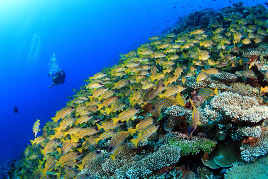 Diving in Maldives | Little Miss Meteo