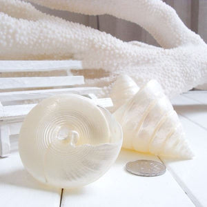 Pagoda Shells Natural Shell | Little Miss Meteo