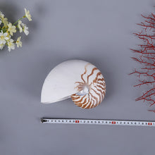 Nautilus Conch Shell