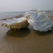 Giant Clam Shells | Little Miss Meteo