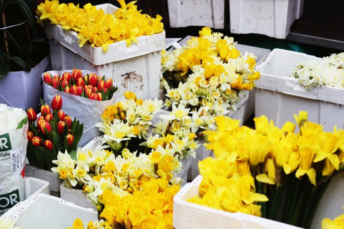 TAKE A TRIP TO COLUMBIA ROAD FLOWER MARKET