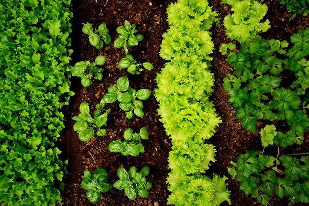 Five Easy Steps To Grow a Home Vegetable Garden!