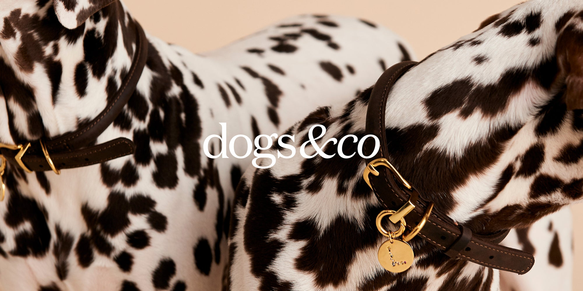 DOGS&CO Collection