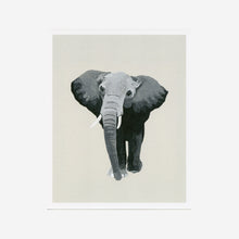 Elephant (The Matriarch) Print