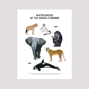 Matriarchs of the Animal Kingdom Print
