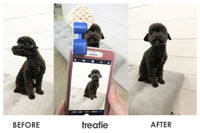 Before and after with a dog looking away from the phone camera and then paying attention after the Treatie photo tool was clipped on the phone.